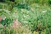 Weeds (しまみゅーら) Tags: minolta α7 af 100300mm f4556 kodak colorplus 200