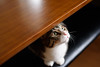 DSC_3199 (catfish.boogie) Tags: nikond750 nikkor50mmf18g japan hokkaido sapporo cat
