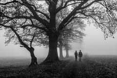 Dans la brume Explored 2016-12-18 (amateur72) Tags: fujifilm normandie arbres brouillard brume fog forest foret forêt mist xt1