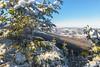 Winter in Poland (z.dorighi) Tags: poland landscape view scenery mountain babia góra winter hoar frost frozen trees woods peak