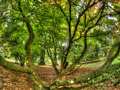 The Fallen Trees (RS400) Tags: trees tree cool wow wicked outside landscape olympus hdr westonbirt arboreturn leaves autumn bristol uk natural
