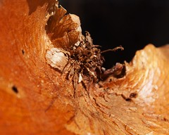 sundried (Leonard J Matthews) Tags: fern nature environment creation sundries brown australia mythoto inexplore