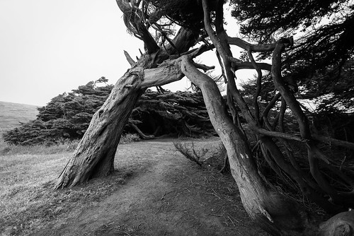 Bodega Headlands, CA