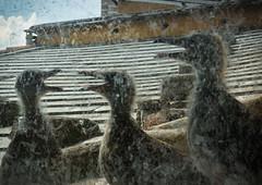beaks to be fed (cj limax) Tags: urban seagulls fauna chicks gabbiani pulcini