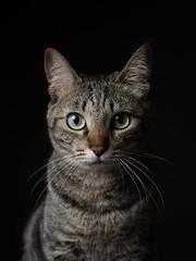 Hana (rampx) Tags: portrait cat pentax tabby hana neko   miaw 645z