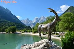 DSC_7198 (Original Loisi) Tags: panorama lake mountains alps nature landscape see view natur berge slovenia slovenija slowenien alpen gebirge steinbock kranjskagora julischealpen karawanken republikaslovenija kronau