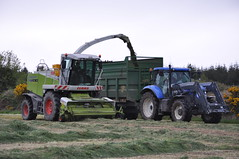 Claas Jaguar 870 SPFH filling a Thorpe Silage Trailer drawn by a New Holland T7 210 Tractor (Shane Casey CK25) Tags: claas jaguar 870 spfh filling thorpe silage trailer drawn by new holland t7 210 tractor