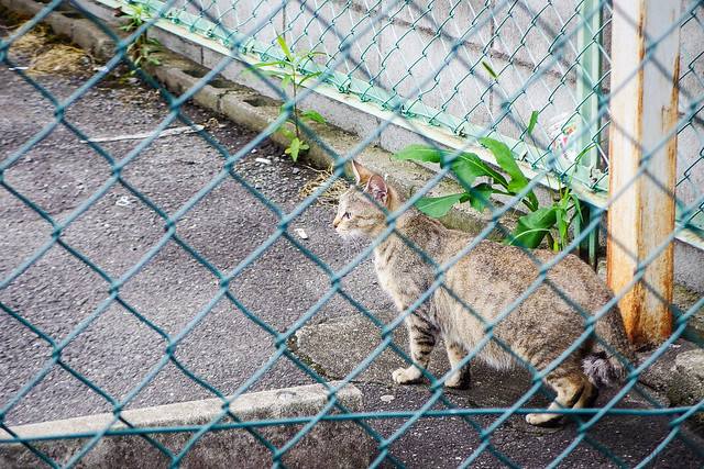 Today's Cat@2015-07-10
