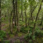 Glendalough Walk 2 thumbnail