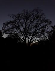 i love this tree (patri aragon) Tags: landscape paisaje treehouse ilovethistree patriciaaragonmartin patriciaaragónmartín