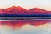Reserva Nacional los Flamencos (josefrancisco.salgado) Tags: 70200mmf28gvrii atacamadesert chile d810a desiertodeatacama lagunachaxa nikkor nikon provinciadeelloa reservanacionallosflamencos atardecer ave bird desert desierto fauna flamenco flamingo mountain ocaso puestadelsol salar saltflats sunset iiregióndeantofagasta montaña pájaro