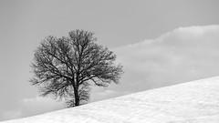 lonely tree in the snow (Blende1.8) Tags: tuscany toskana lanschaft landscape snow schnee winter italy iatlien field feld tree baum single solitair impression monochrome mono monochrom schwarz weiss black white nikon d700 afs 70300mm nikkor fineart nature natur