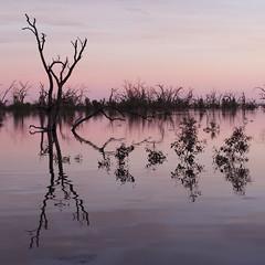 2016.11.18.05.23.04-Dawn on Lake Menindee (www.davidmolloyphotography.com) Tags: newsouthwales darlingriver menindee kinchega kincheganationalpark lakemenindee dawn lake