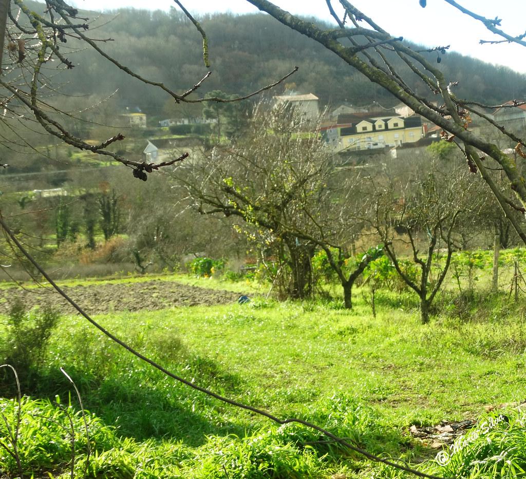 Águas Frias (Chaves) - ... campo verdejante ...