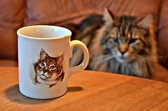 Kopp / Cup (KvikneFoto) Tags: kopp cup mug elvis 2017 bokeh nikon