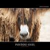POITOU-ESEL (Matthias Besant) Tags: animal animals tier tiere winter mammal saeugetier mammalia saeugetiere mammals hausesel baudetdepoitou poitouass poitoudonkey poitevindonkey mammothdonkey esel donkey poitouesel wilhelma zoo zoostuttgart matthiasbesantphotography matthiasbesant deutschland
