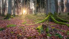 Light (Sebo23) Tags: sunbeams sun sunrays sonne sonnenstrahlen sonnenstern wald forest gegenlicht laub moos licht lichtstimmung landscape landschaft canon6d canon24704l