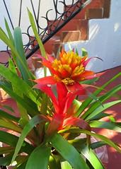 Key West (Florida) Trip 2016 1771Rif 5x7 (edgarandron - Busy!) Tags: florida keys floridakeys keywest keywestgardenclub