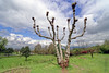 Chashma Shahi ... (Bijanfotografy) Tags: nikon nikond800 zeiss zeissdistagon15mm28 zeiss15mm srinagar india chashmashahi garden tree nature
