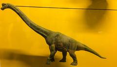 Brachiosaurus (roamingtummy) Tags: taichung taichungcity taiwan tw theroamingtummy nationalmuseumofnaturalscience travel museum brachiosaurus dinosaur