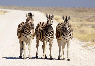 DSC09533 - NAMIBIA 2013