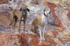 Colourful (farahleon) Tags: farah leon lasnegras dog gazehound sighthound galgo galgoespañol lurcher