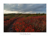 A Path into the Red (Ken Krach Photography) Tags: spruceknobsenecarocksnationalrecreationarea westvirginia dollysods