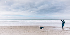 a man and his dog (cheungcalove) Tags: sanfrancisco fortfunston california whippet dog fetch dan familydocumentary