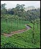 Stanmore (Indianature st2i) Tags: valparai westernghats tamilnadu tea indianature india indiragandhiwildlifesanctuary anamalaitigerreserve anamalais anamallais 2016 2017 nature stanmoreestate