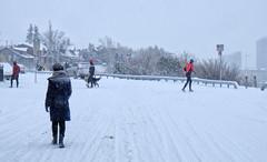 Snow Day! (Sherlock77 (James)) Tags: calgary snow winter crescenthill streetphotography people man woman dog