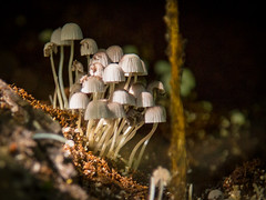 Comunidade Feliz (Ars Clicandi) Tags: sãopaulo brasil são paulo brazil saomiguelarcanjo miguel arcanjo parquedozizo parque do zizo mataatlantica mata atlantica floresta forest pousada trilha track cogumelo fungo funghi mushroom br