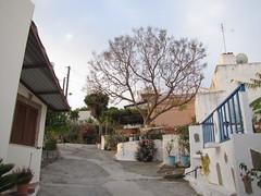 20160502-063720LC (Luc Coekaerts from Tessenderlo) Tags: grc greece kalavárda kalythies cc0 creativecommons 20160502063720lc streetview tree flower flowerpot bloempot white blue public nobody coeluc vak201605rodos vak rodos rhodes