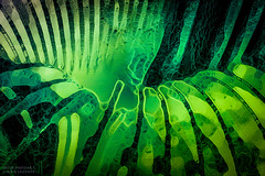 Emerald Slinky Innards (PhotoArtMarie) Tags: emerald black ribs slinky creativeedit texture
