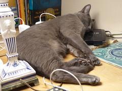 Sweet little guy (Philosopher Queen) Tags: leo teddy chat gato kitty graycat bluecat nap napping sleepy kitten