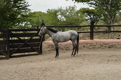 (zitla li) Tags: ranch trip travel horse love colors beautiful beauty landscape mexico fun photography freedom town nice nikon place weekend country like free jalisco tranquility natura land pace lovely freetime d7000 lifesimple