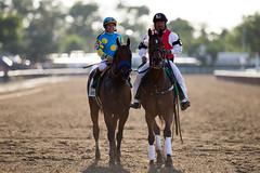 American Pharoah victory gallop (SouthpawCaptures) Tags: park horse belmont racing american crown triple pharoah stakes