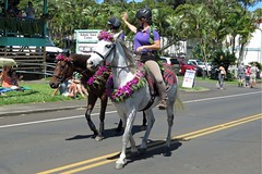 decorated steeds (BarryFackler) Tags: street flowers horses holiday history floral animal palms mammal outdoors hawaii polynesia outdoor wave parade lei mount celebration palmtrees event historical bigisland steed harness creature waving equestrian saddle equine riders helmets bridle reins hawaiianislands horsewomen domesticanimal saddleblanket hawaiicounty northkohala hawaiiisland kapaau hawaiianculture sandwichislands kingkamehamehaday westhawaii hawaiianhistory akonipulehighway hawaiianheritage kingkamehamehadayparade barryfackler barronfackler kingkamehamehaday2015 kohalatowncenter