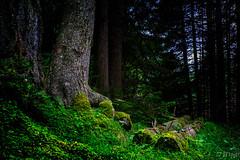 20150807-_DSC2804.jpg (JTrojer) Tags: austria tirol sterreich mhltal viggartal