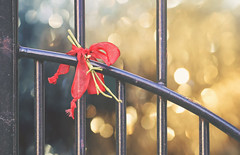 Tie the Knot (charhedman) Tags: fencefriday ribbon fence gate iron knot tietheknot bokeh
