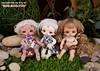 [Dollpamm] BEBE Basic Imp Family (Dollpamm Sculptor Dr.Mes) Tags: dollpamm roo boo yoo imp demonbaby pocketdoll bjd balljointeddoll babydoll babybjd drmes