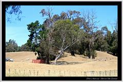 Pastoral New Zealand. (Petera3015) Tags: pastoral farmpaddocks napier havelocknorth newzealand