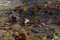 Leaves in Water (panos_adgr) Tags: helios 81n 50mm f20 water leaves colors nikon d7200 sovietlens greece bokeh