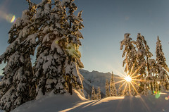 In all its glory (Don Jensen) Tags: sun rise sunrise mount baker snow winter tree trees shadow shadows star sunstar tokina 1116 canon 60d washington
