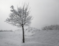 Frozen white... (palma13) Tags: weather winter white swiss bw snow natur nature landscape travel technics trees tree art