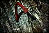 Red - King Crimson (Janusz Kudlak) Tags: ilovemywife agnieszka myniu pastuch minimum minimalism sony alpha700 art abstract nail red