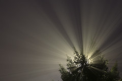 Foggy dawn (medzsik55) Tags: sony a6000 fog dawn light rays night