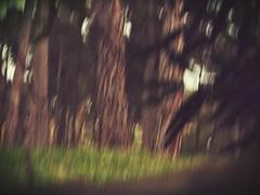 Lurking (AMoska) Tags: natureza nature árvores trees folhagem folhas foliage leaves tronco trunk wood floresta movimento motion icm intentionalcameramovement