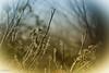 """Un jour de l'an """"givré""""... (Crilion43) Tags: arbres france véreaux divers ciel réflex paysage jardin centre objectif canon herbe tamron 1200d cher brouillard nature nuages sapin thuya"""