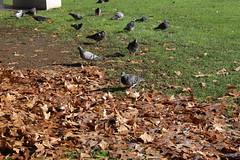 06237525 (chirlychong) Tags: 2016623 鳥 公園 落葉