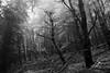 DSC_2043 (spartacus mills) Tags: treesinwinter nikond7100 deadtrees fog treesinfog ravenwalk mynyddislwyn cilfynydd wales